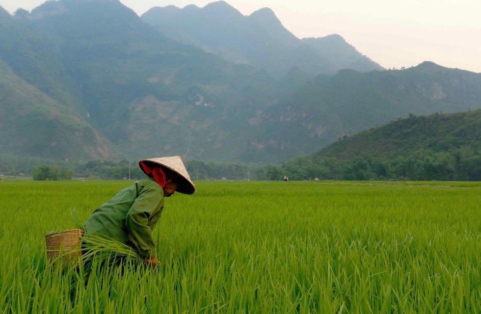 Un road trip au Vietnam dans les rizières