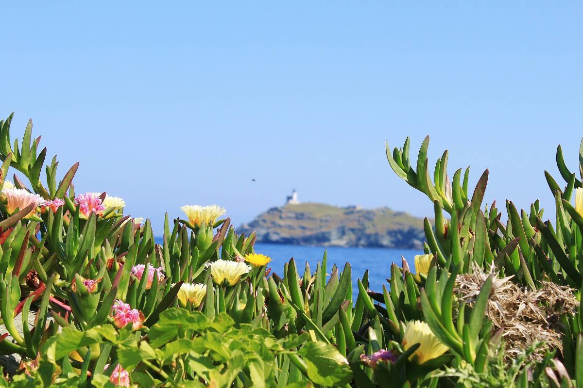Plages et road trip en Corse